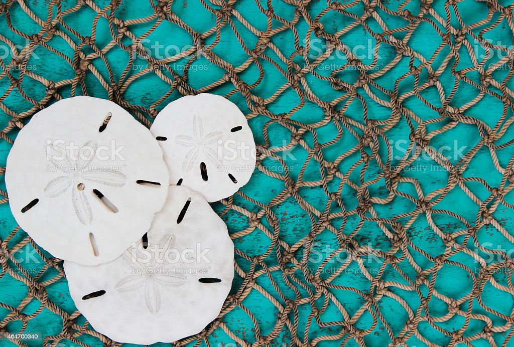Fish netting background with sand dollars collage stock photo
