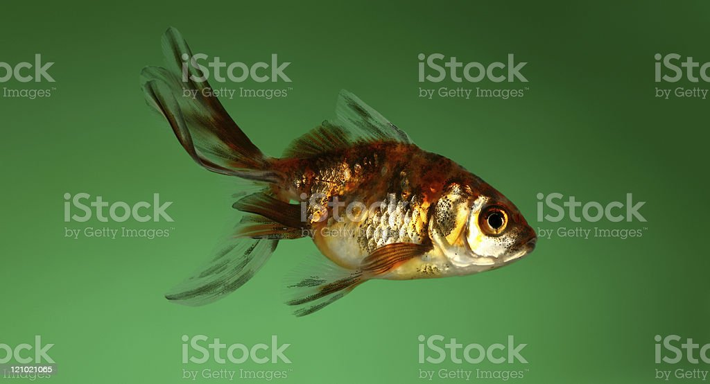 fish on a green background stock photo