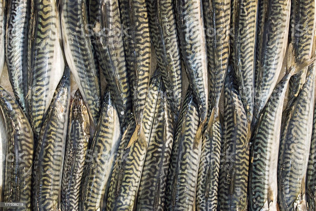 Fish on a market royalty-free stock photo