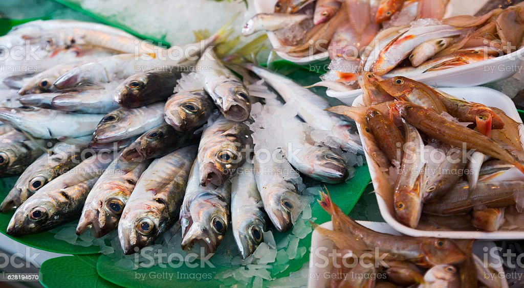 fish on counter stock photo