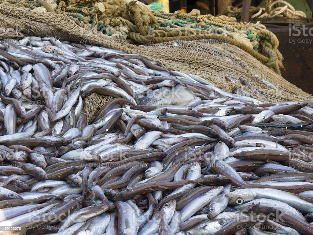 fish on deck factory vessel stock photo