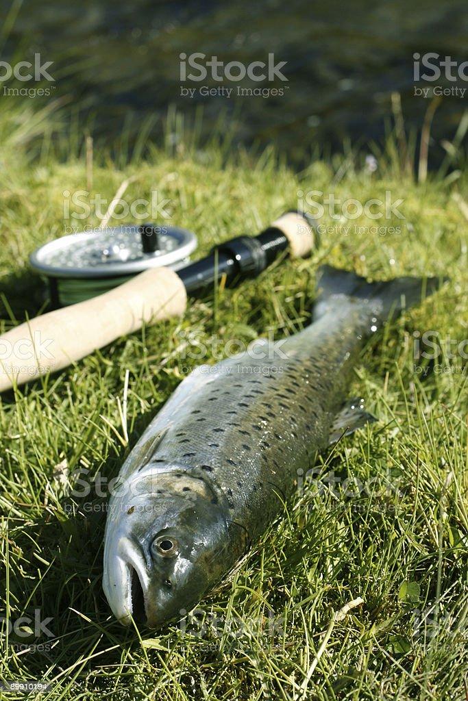 Fish on dry land royalty-free stock photo