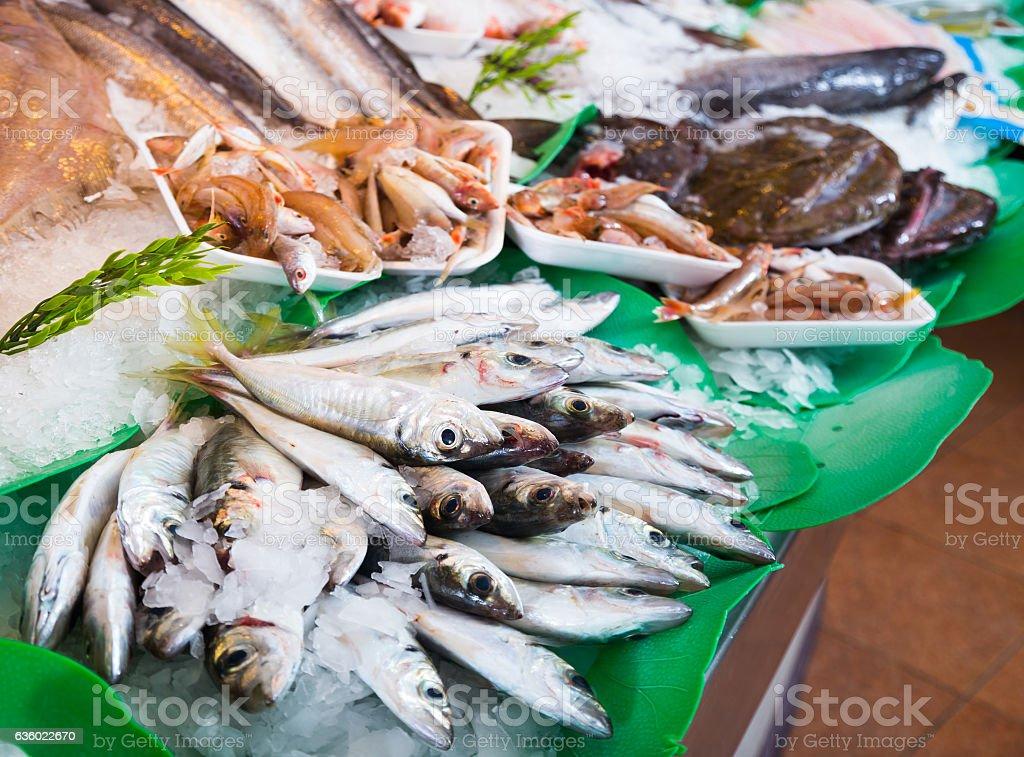 fish on fish market stock photo