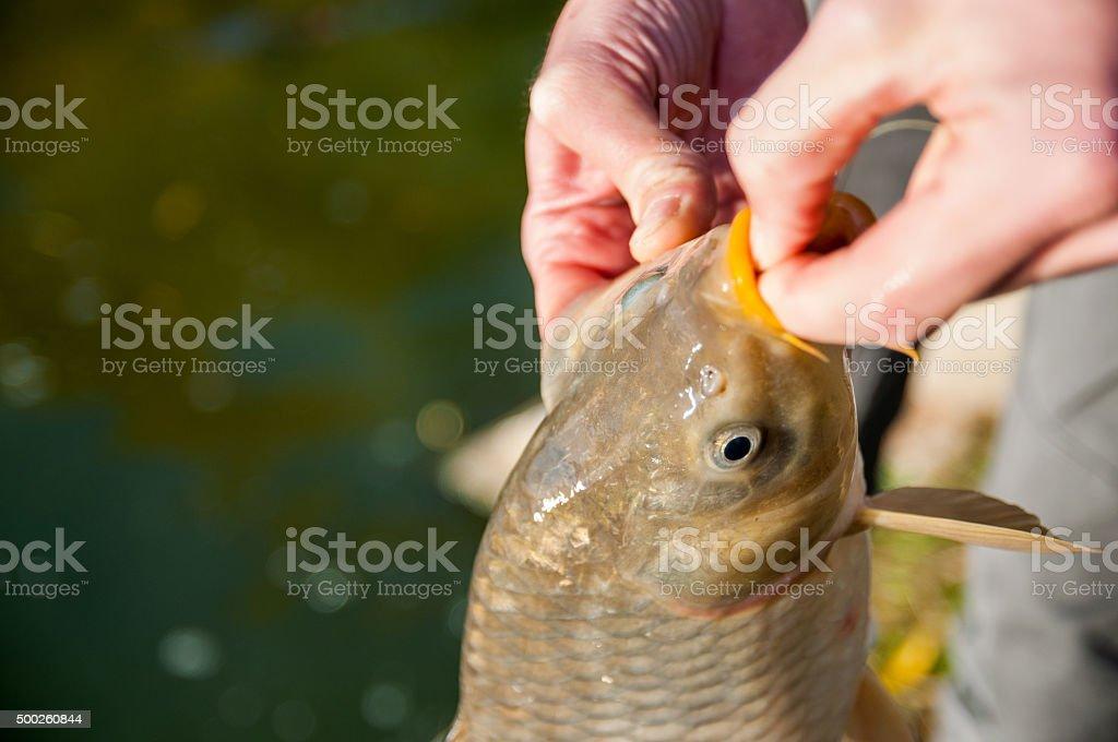 Fish on hook stock photo