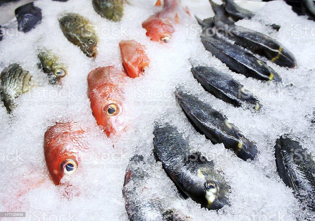 Fish on ice stock photo
