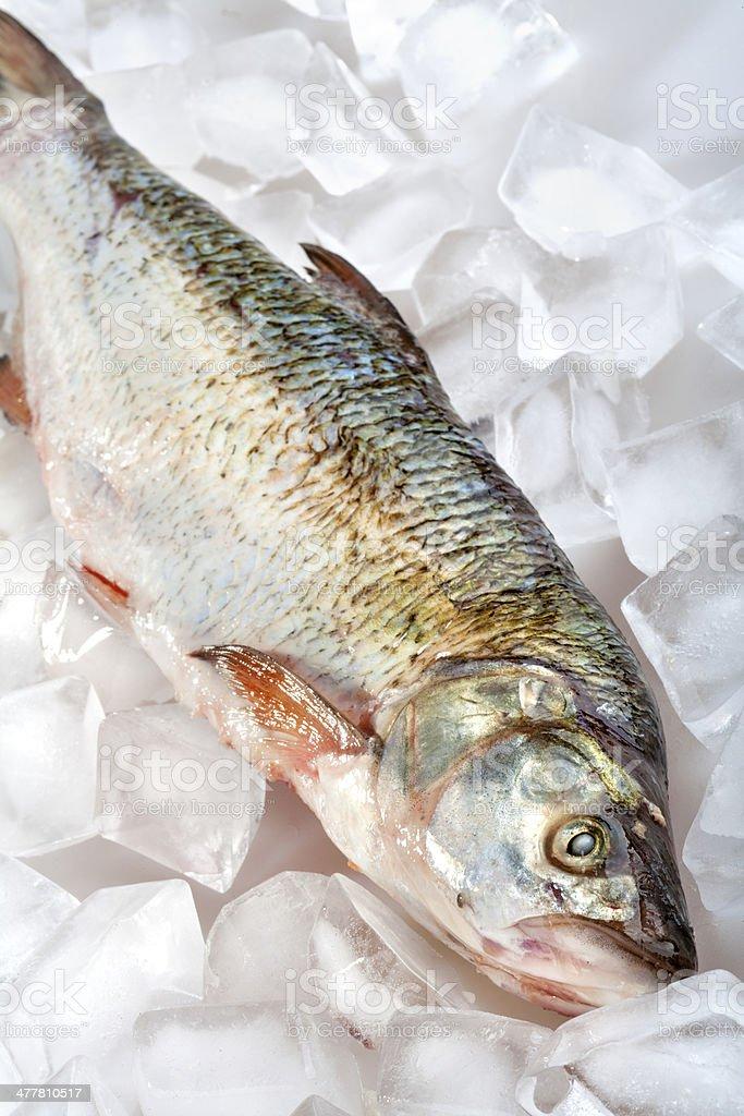 fish on ice royalty-free stock photo