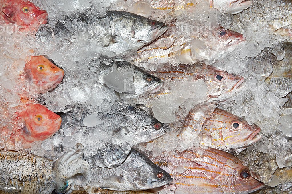 Fish on ice stock photo