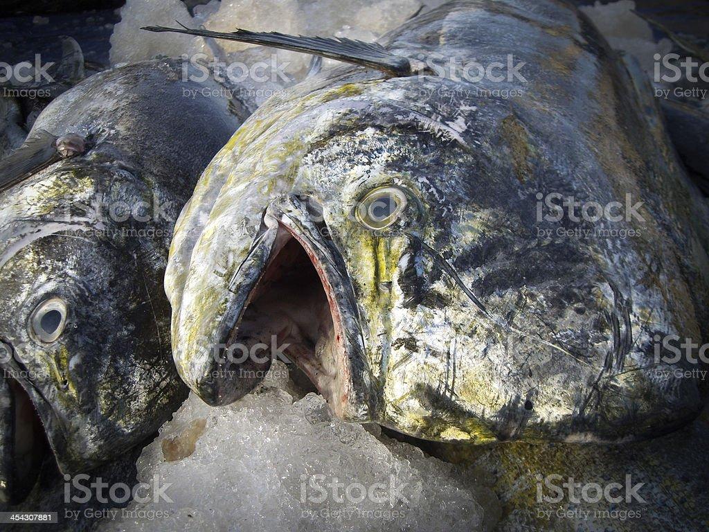 fish on market stock photo