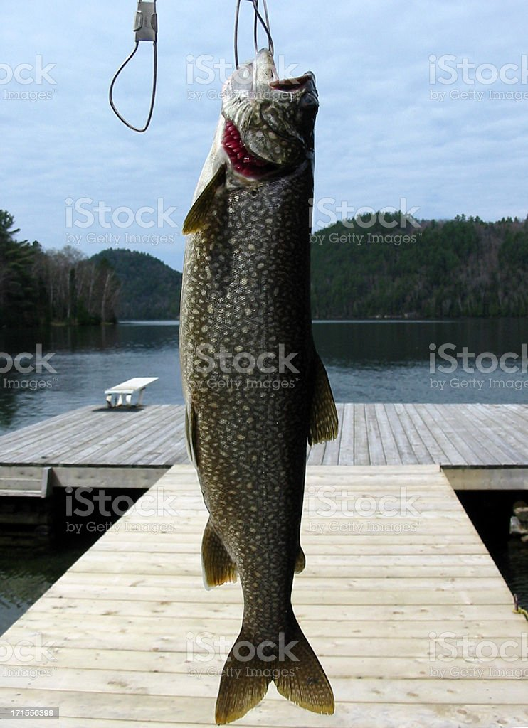 Fish on Stringer stock photo