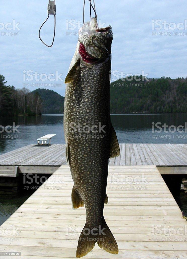 Fish on Stringer stock photo