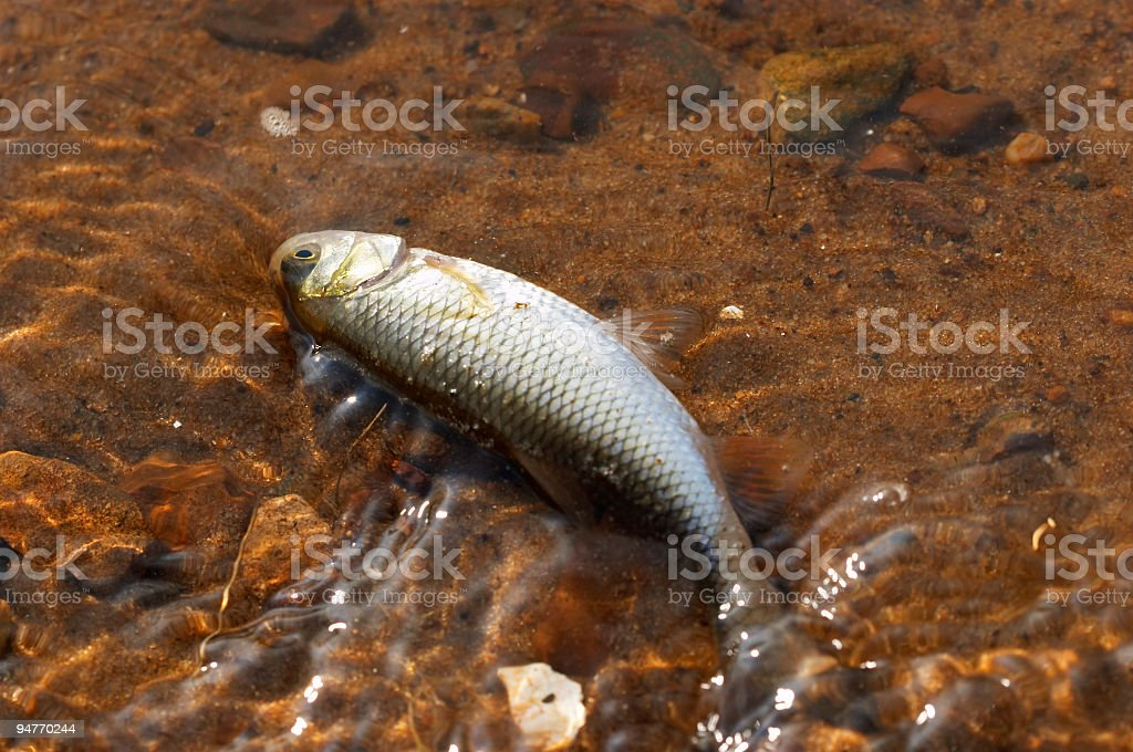 fish on the beach royalty-free stock photo