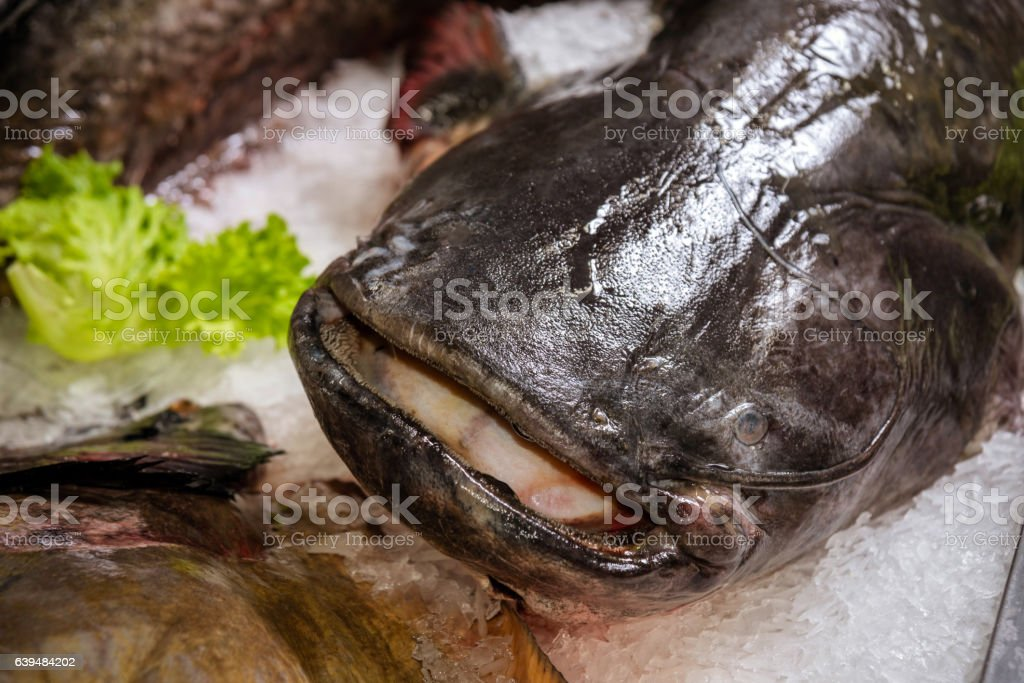 fish on the counter in the supermarket stock photo