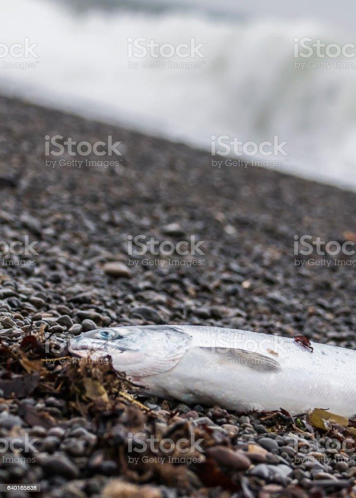 fish on the shoreline stock photo