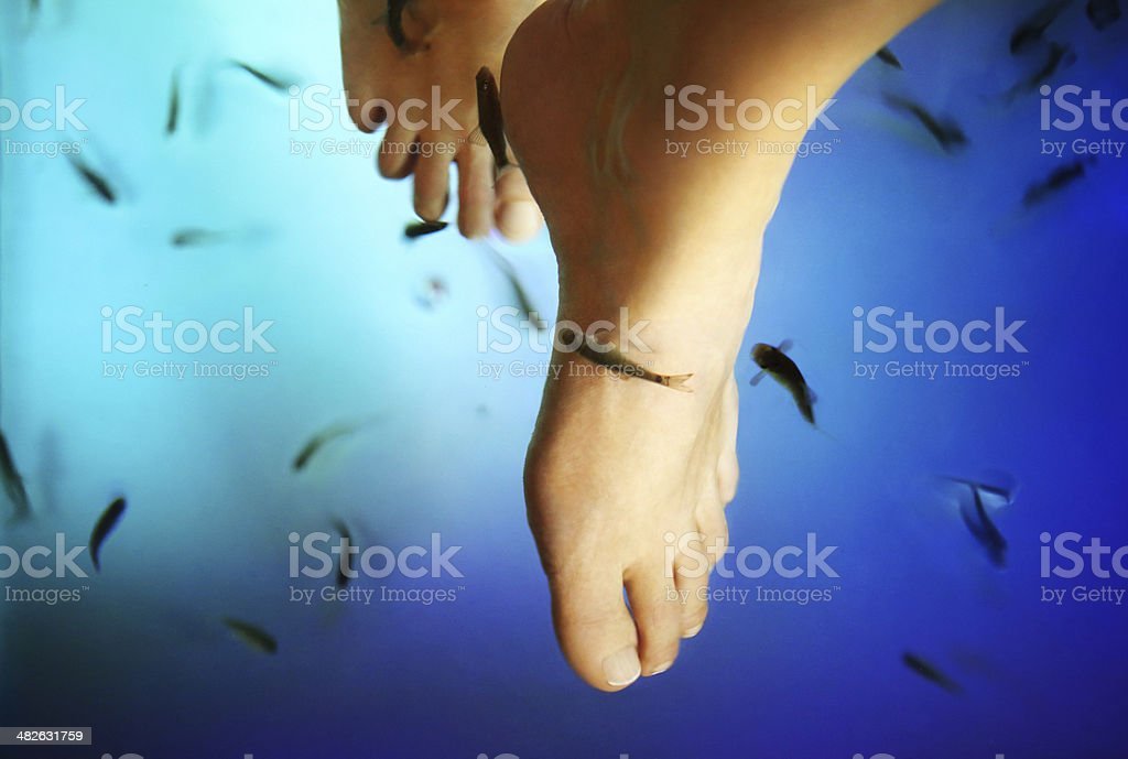 Fish pedicure. stock photo
