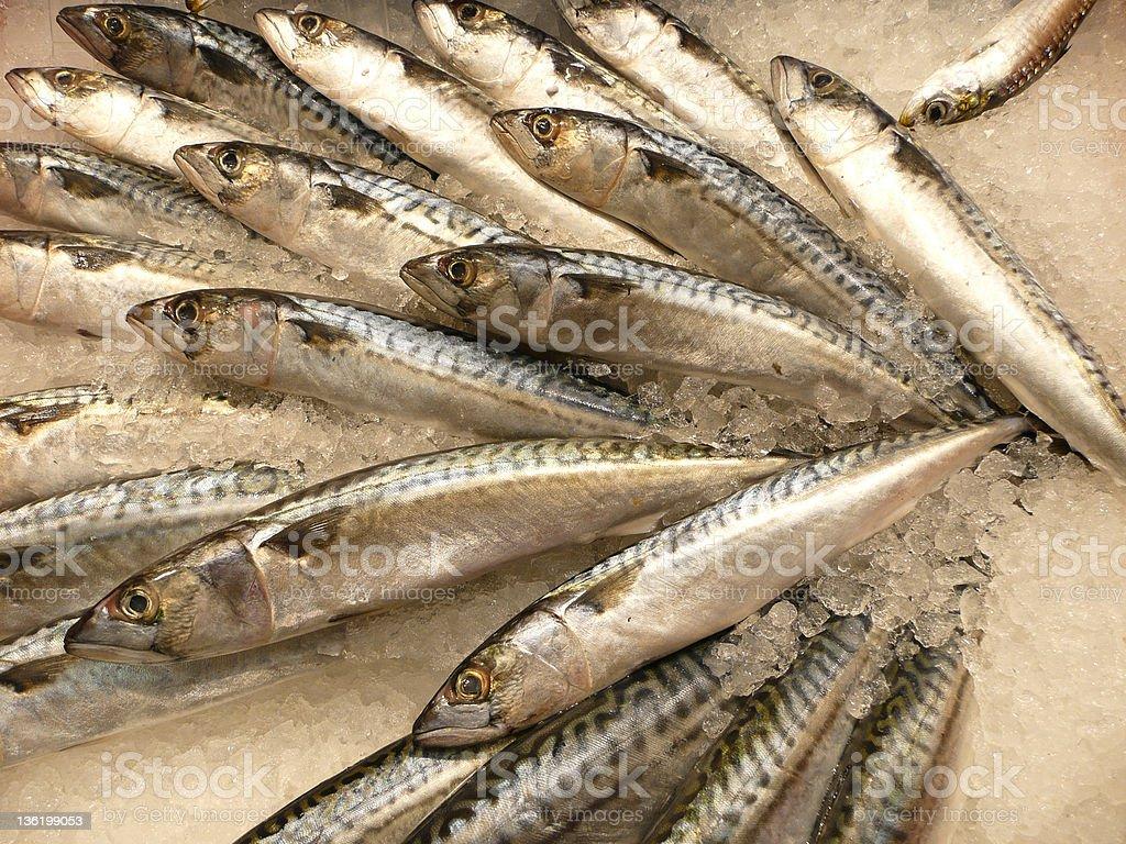 Fish, Pescado royalty-free stock photo