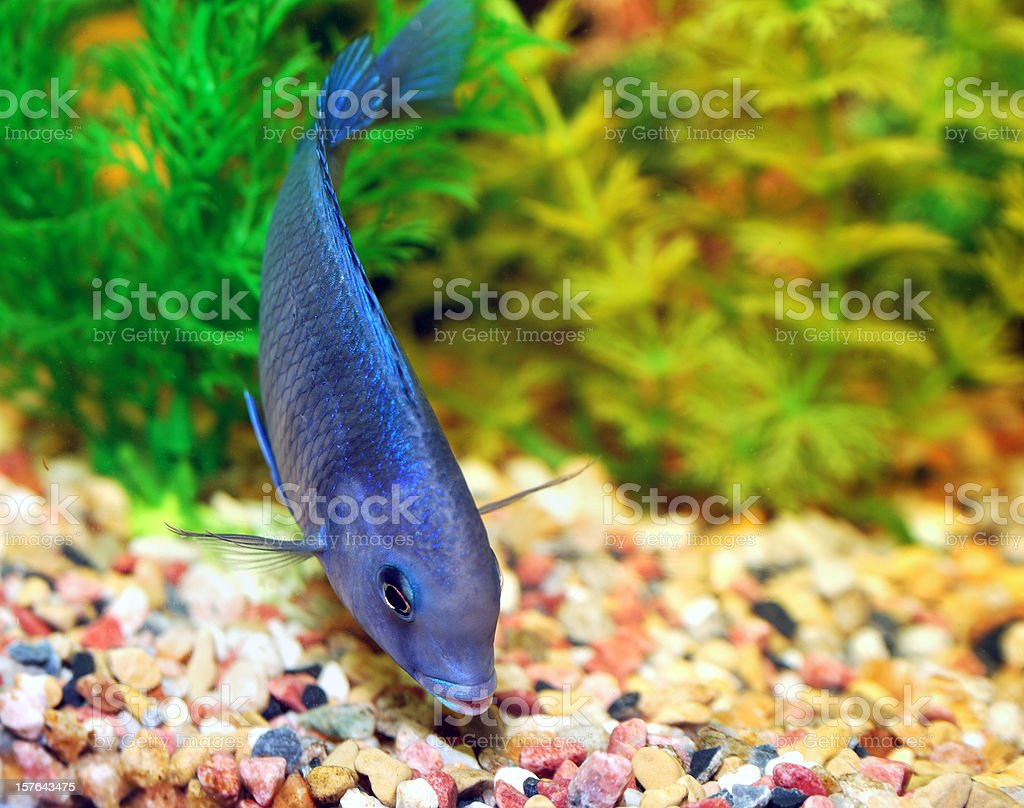 Fish royalty-free stock photo
