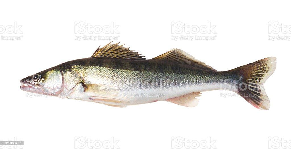 Fish. stock photo