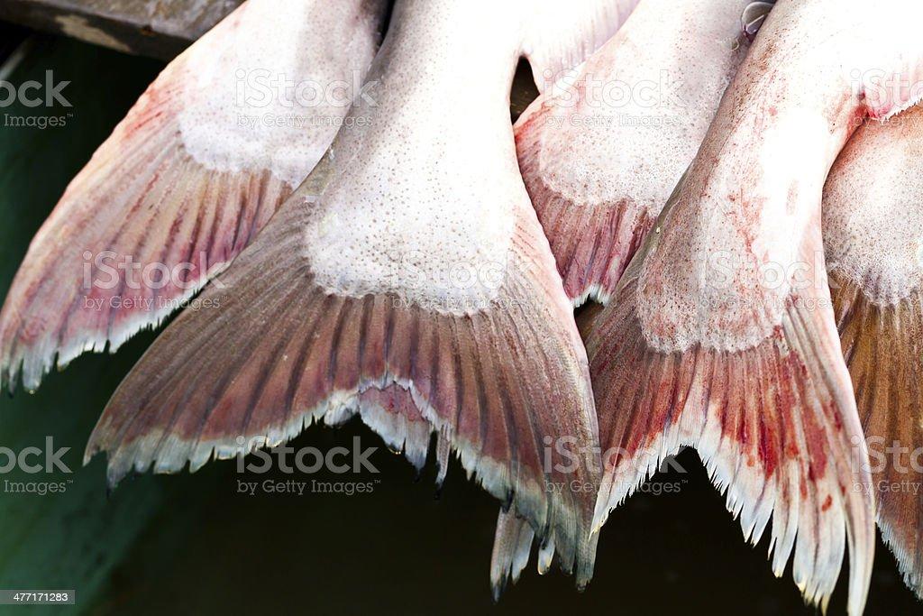 Fish. royalty-free stock photo
