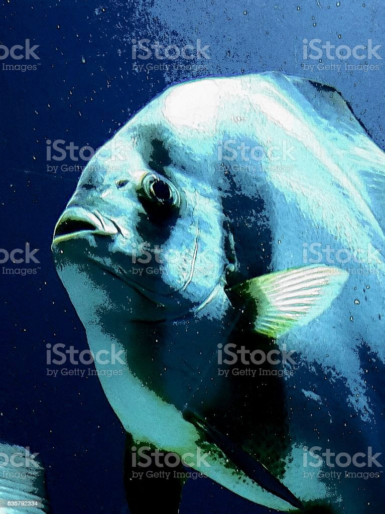 fisch stock photo