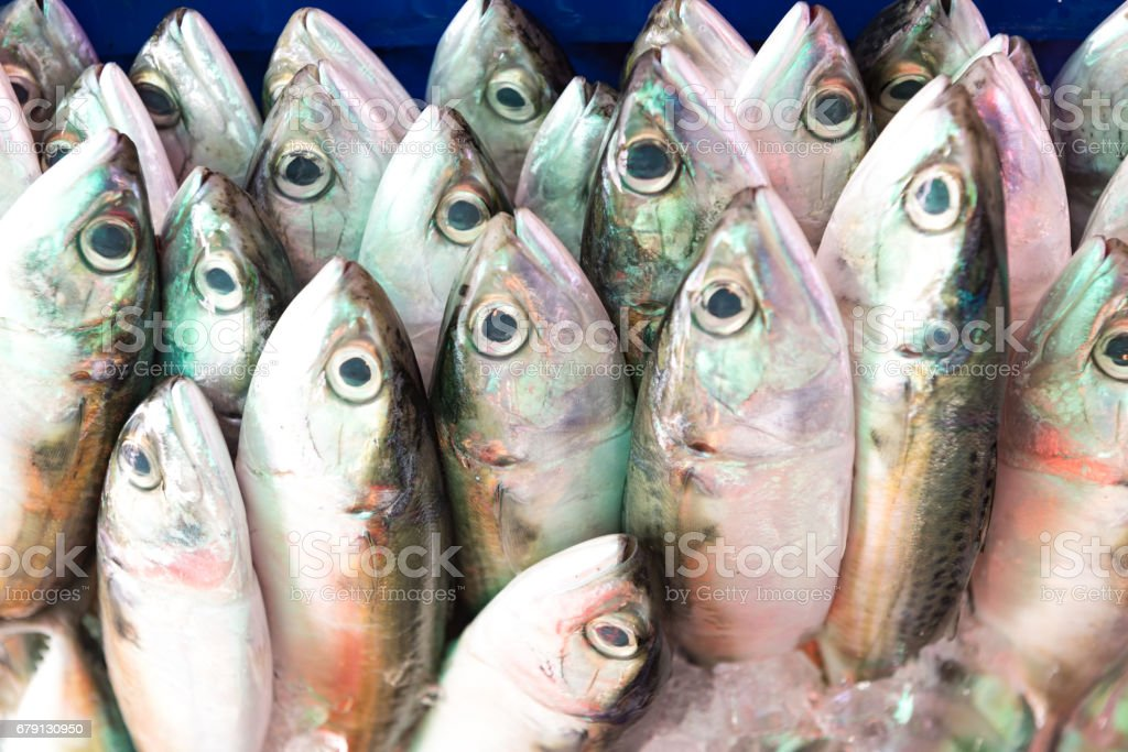 fish stock photo