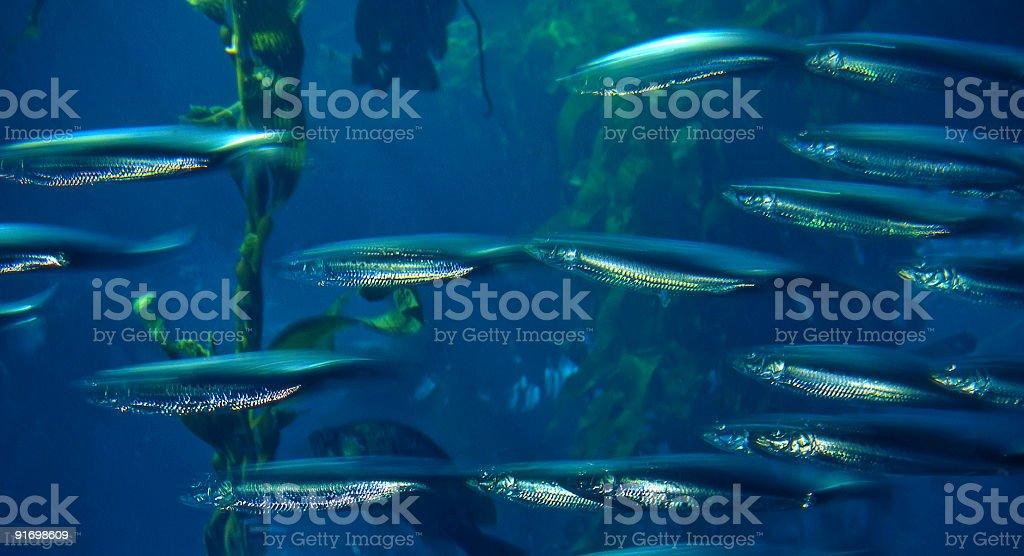 Fish royalty-free stock photo