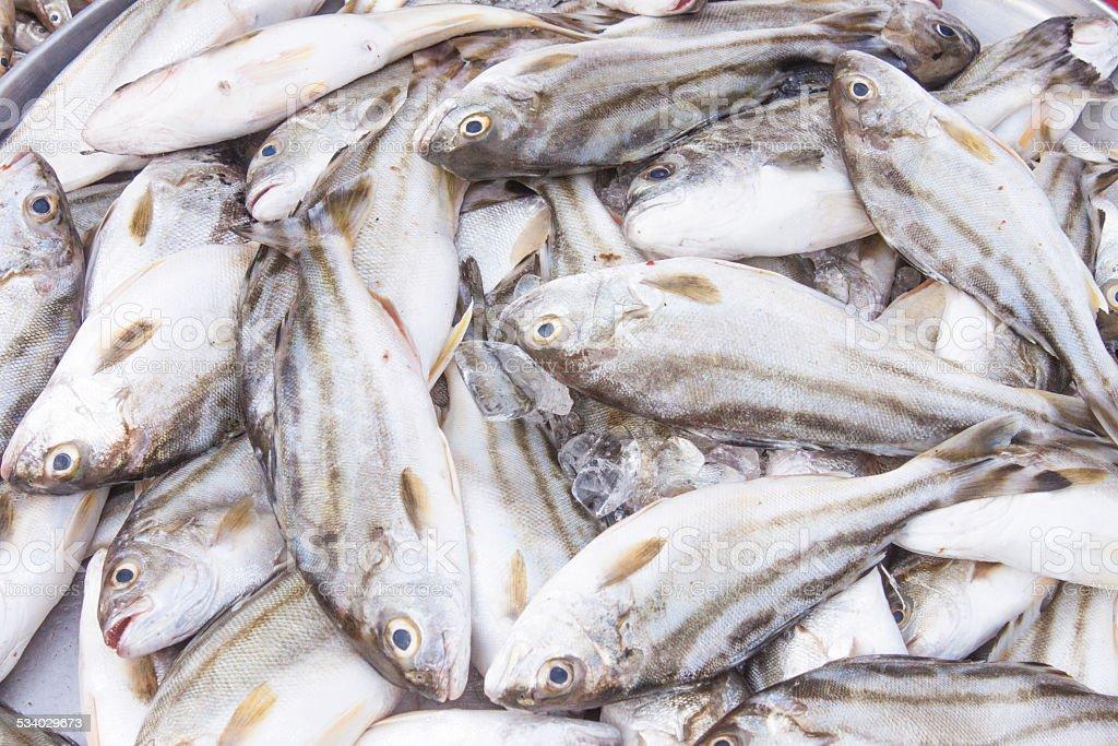 Fish pile stock photo