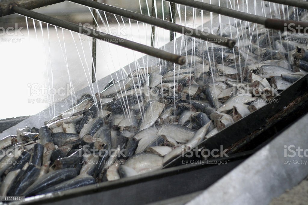 fish plant stock photo