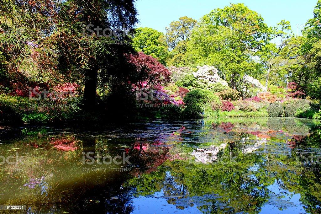 peces del estanque del jardn diseado con japons maples y rboles foto de stock libre