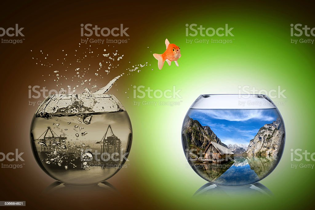 fish rethink concept stock photo