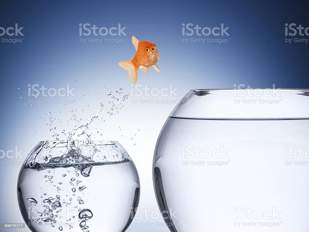 fish rise concept stock photo