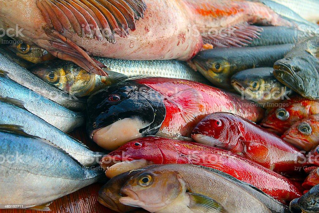 Fish, seafood, sea, pescados stock photo