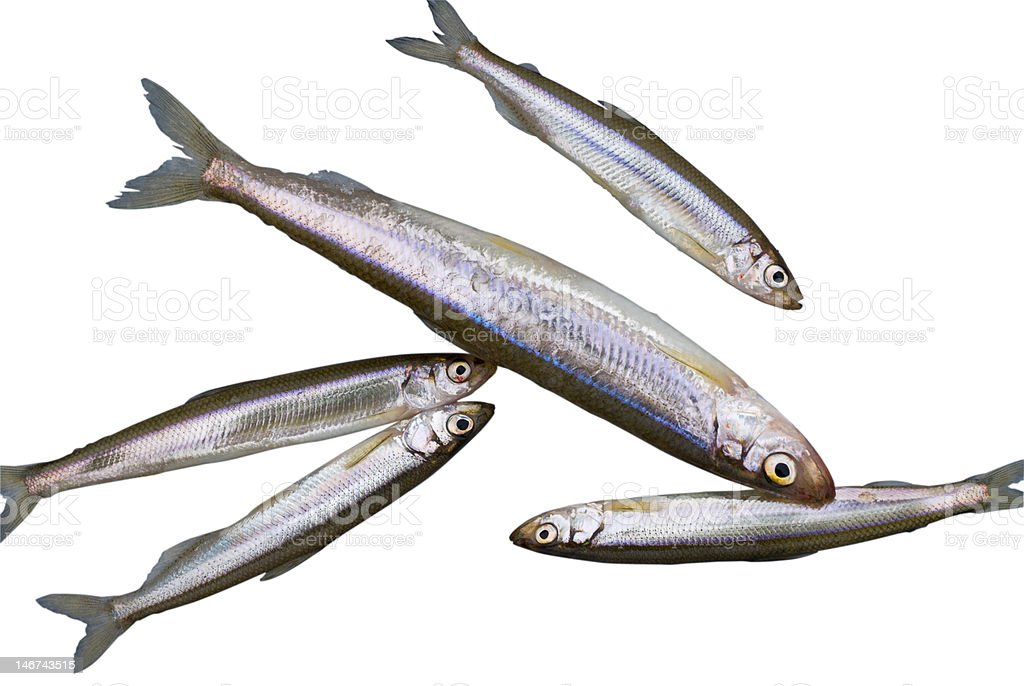 Fish Smelt royalty-free stock photo