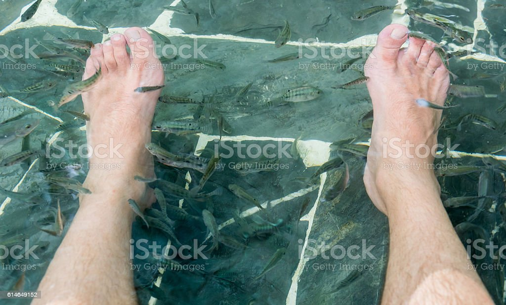 Fish spa pedicure wellness skin care treatment with the fish stock photo
