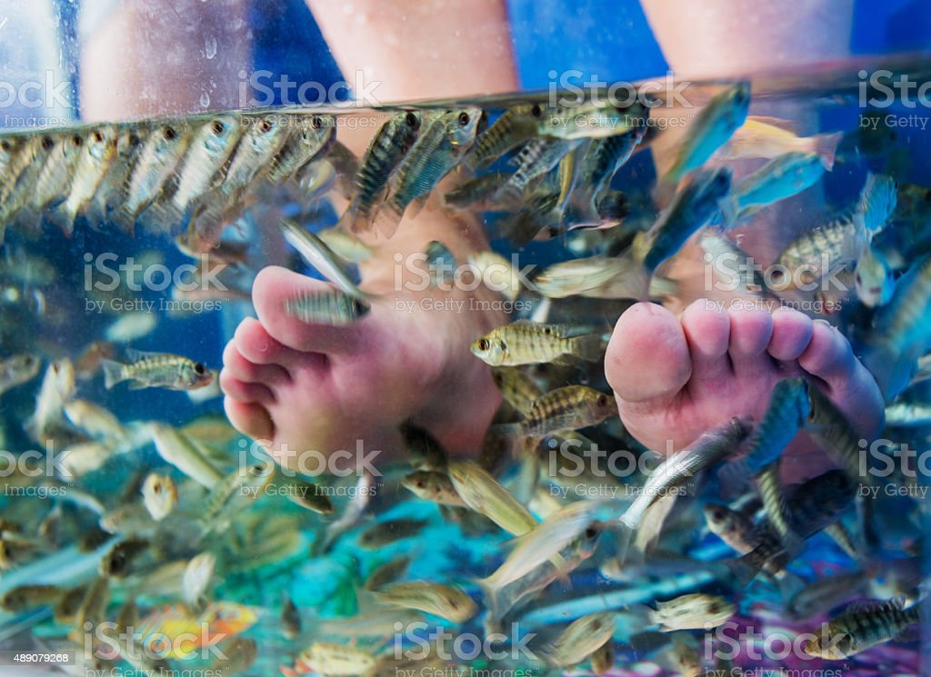 Fish spa treatment stock photo