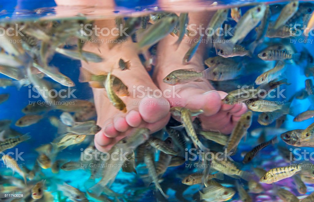 Fish spa treatment stock photo