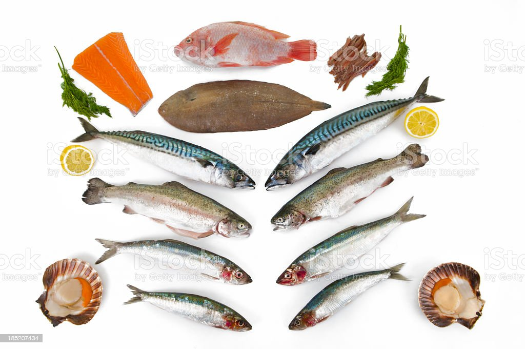 Fish Species all rich in Omega 3 for healthy eating stock photo