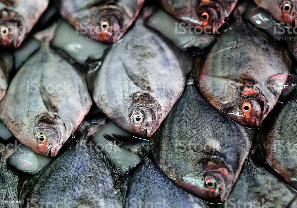 Fish stalls pattern close-up royalty-free stock photo