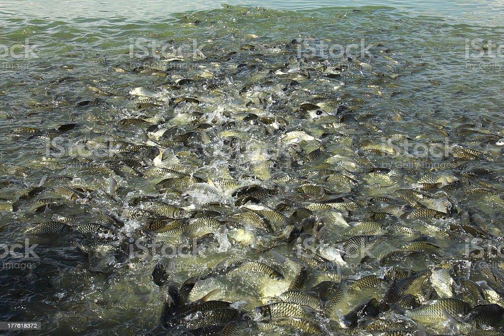 Fish swim together stock photo