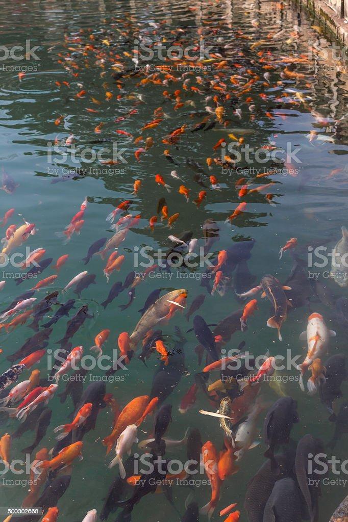 Fish Swimming Away stock photo