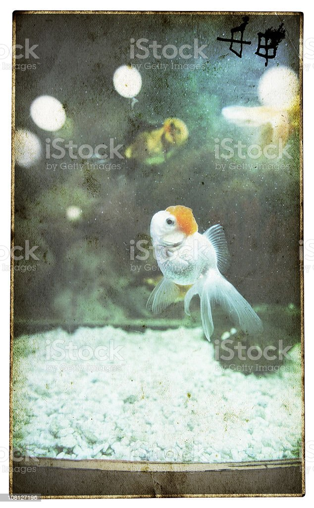 Fish Swimming in a Dirty Tank stock photo