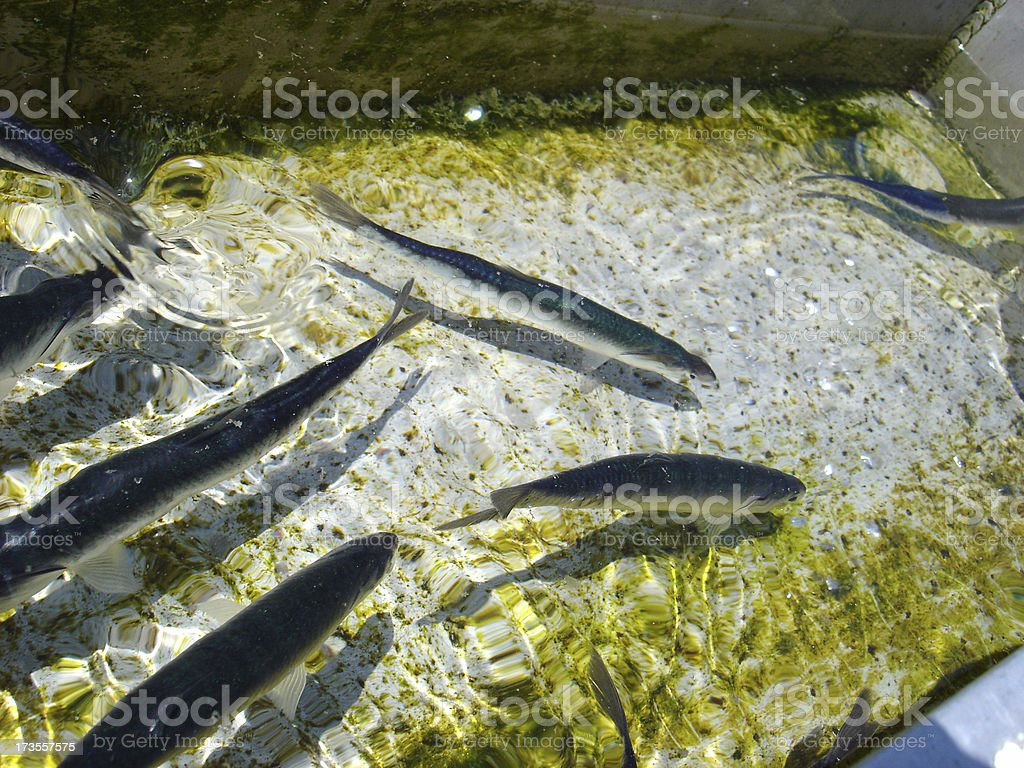 Fish Swimming stock photo