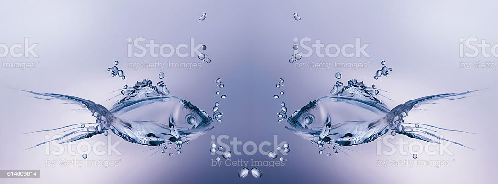 Fish Swimming royalty-free stock photo