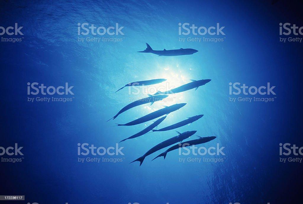 Fish Swimming Under Light royalty-free stock photo