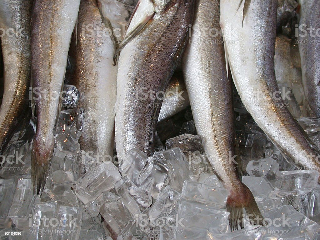 Fish tails royalty-free stock photo