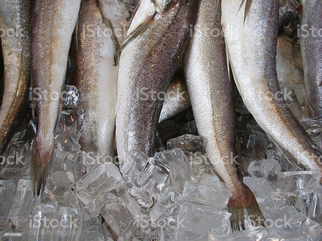 Fish tails stock photo