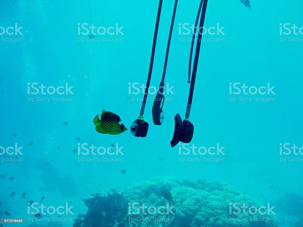 Fish testing diving gear. stock photo