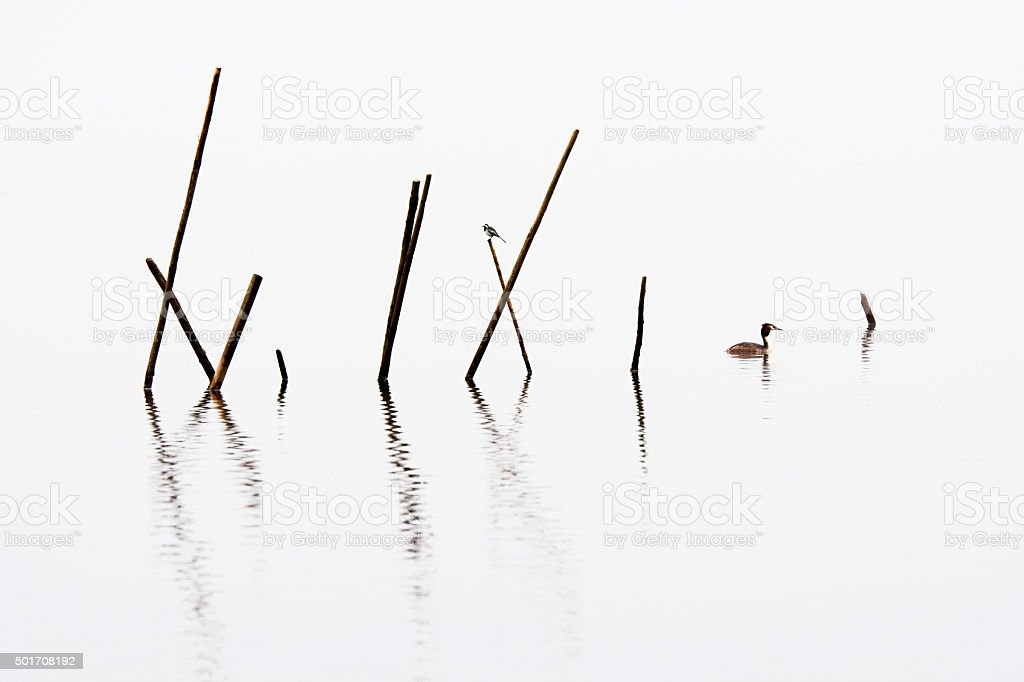 Fish trap with wagtail and great crested grebe on lake stock photo