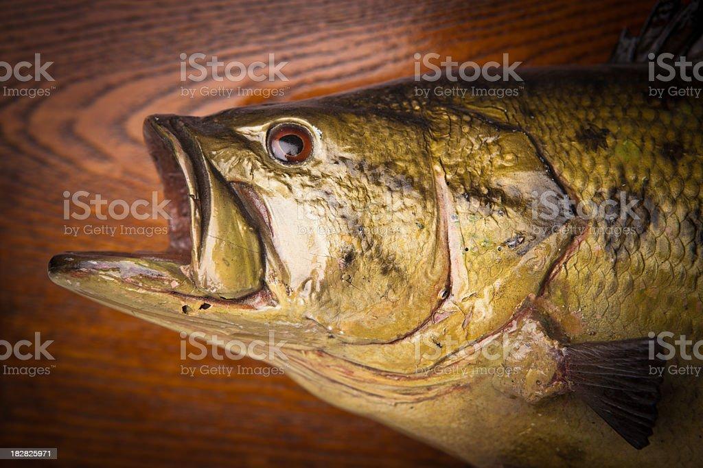 Fish Trophy stock photo