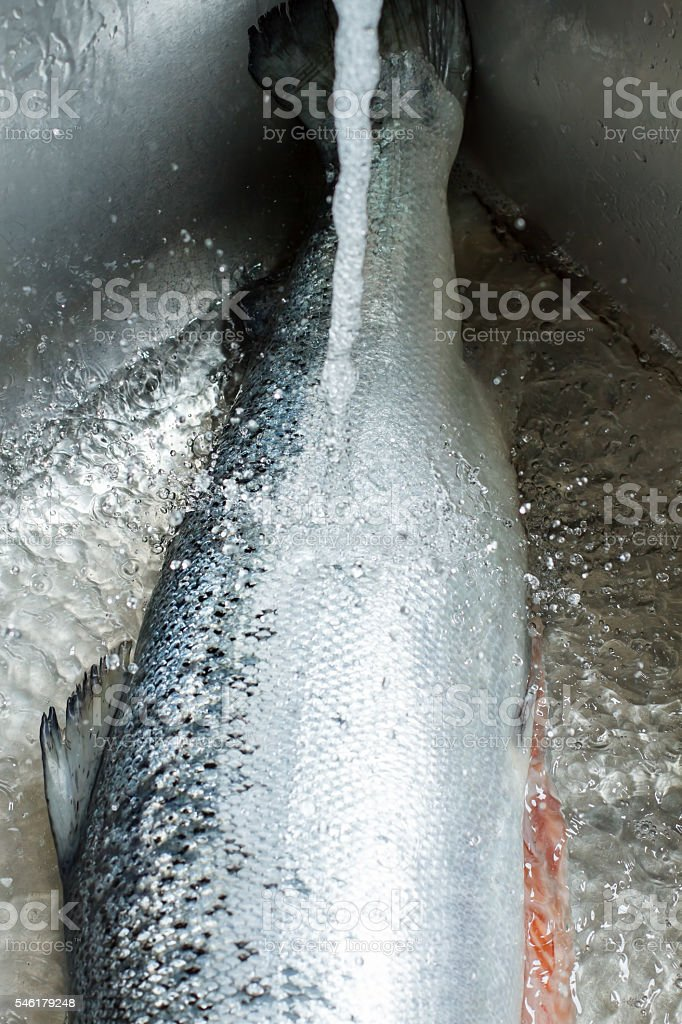 Fish under water flow. stock photo