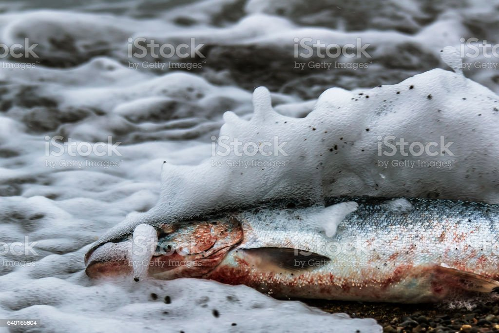 fish washed ashore on the beach stock photo